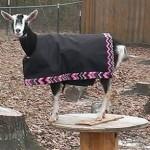Marlena Coat